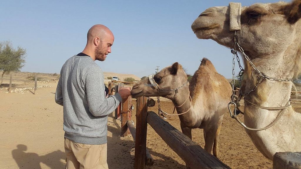 "Photo of Negev Camel Ranch  by <a href=""/members/profile/kristoferaberg"">kristoferaberg</a> <br/>Checking out the camels in the morning <br/> October 23, 2016  - <a href='/contact/abuse/image/81253/183971'>Report</a>"