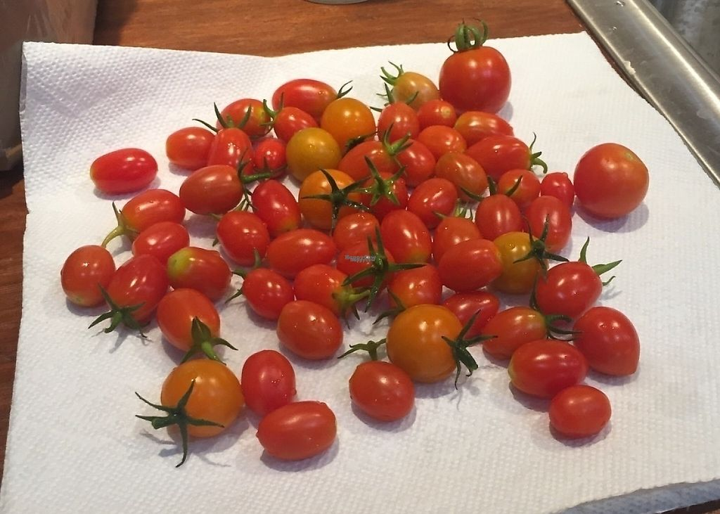 """Photo of Rosa Farms  by <a href=""""/members/profile/AndrewBachman"""">AndrewBachman</a> <br/>Garden fresh cherry tomatoes <br/> October 15, 2016  - <a href='/contact/abuse/image/81428/202229'>Report</a>"""