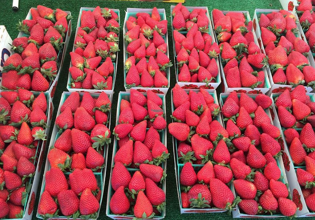 """Photo of San Clemente Certified Farmers Market  by <a href=""""/members/profile/community"""">community</a> <br/>Strawberries <br/> March 29, 2017  - <a href='/contact/abuse/image/82416/242230'>Report</a>"""