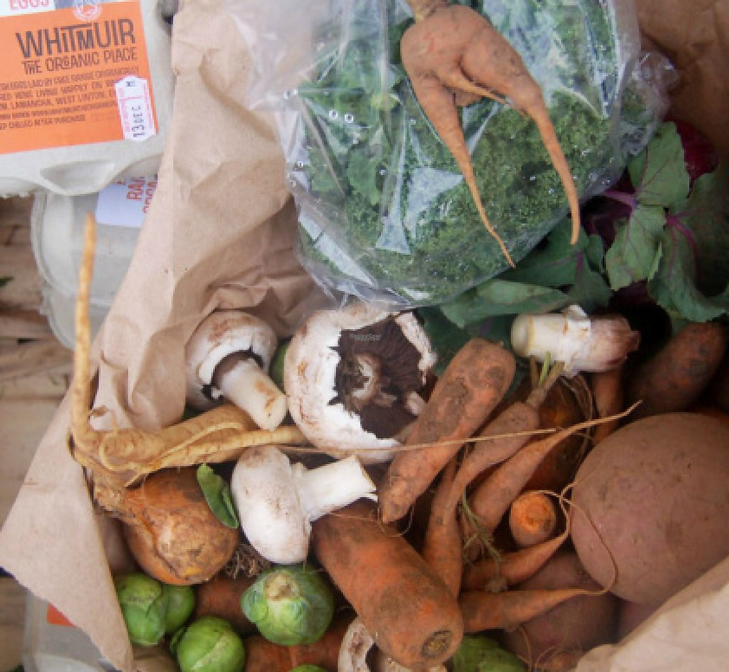 """Photo of Hearty Squirrel Food Cooperative  by <a href=""""/members/profile/community"""">community</a> <br/>Veg Bag <br/> November 27, 2016  - <a href='/contact/abuse/image/83171/195134'>Report</a>"""