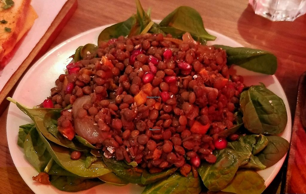 """Photo of 90 Degree Melt  by <a href=""""/members/profile/Plumesworld"""">Plumesworld</a> <br/>lentil salad <br/> October 12, 2017  - <a href='/contact/abuse/image/83214/328619'>Report</a>"""
