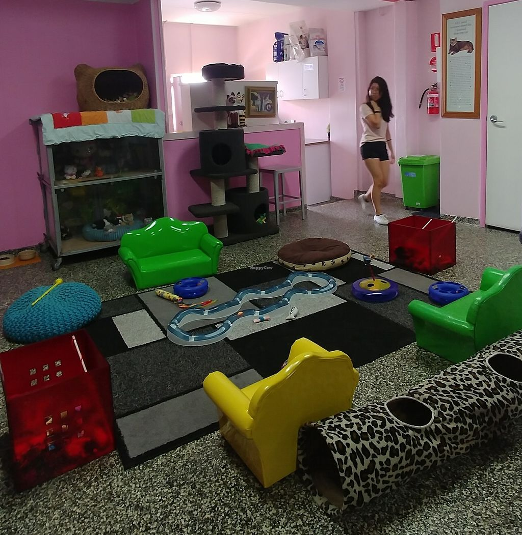 """Photo of Cat Cuddle Cafe  by <a href=""""/members/profile/karlaess"""">karlaess</a> <br/>Cats indoor playground <br/> December 31, 2017  - <a href='/contact/abuse/image/83222/341271'>Report</a>"""