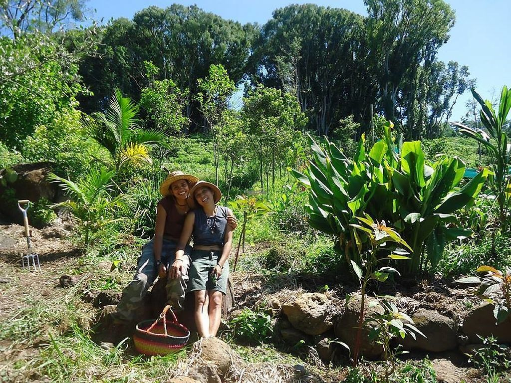 """Photo of Paradise One Retreat  by <a href=""""/members/profile/Lanky"""">Lanky</a> <br/>Harvesting time <br/> December 19, 2016  - <a href='/contact/abuse/image/83938/202800'>Report</a>"""