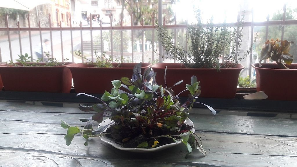 """Photo of Sofy Glocal Cuisine  by <a href=""""/members/profile/SofiaPalacios"""">SofiaPalacios</a> <br/>Baby greens <br/> January 8, 2017  - <a href='/contact/abuse/image/84715/209556'>Report</a>"""