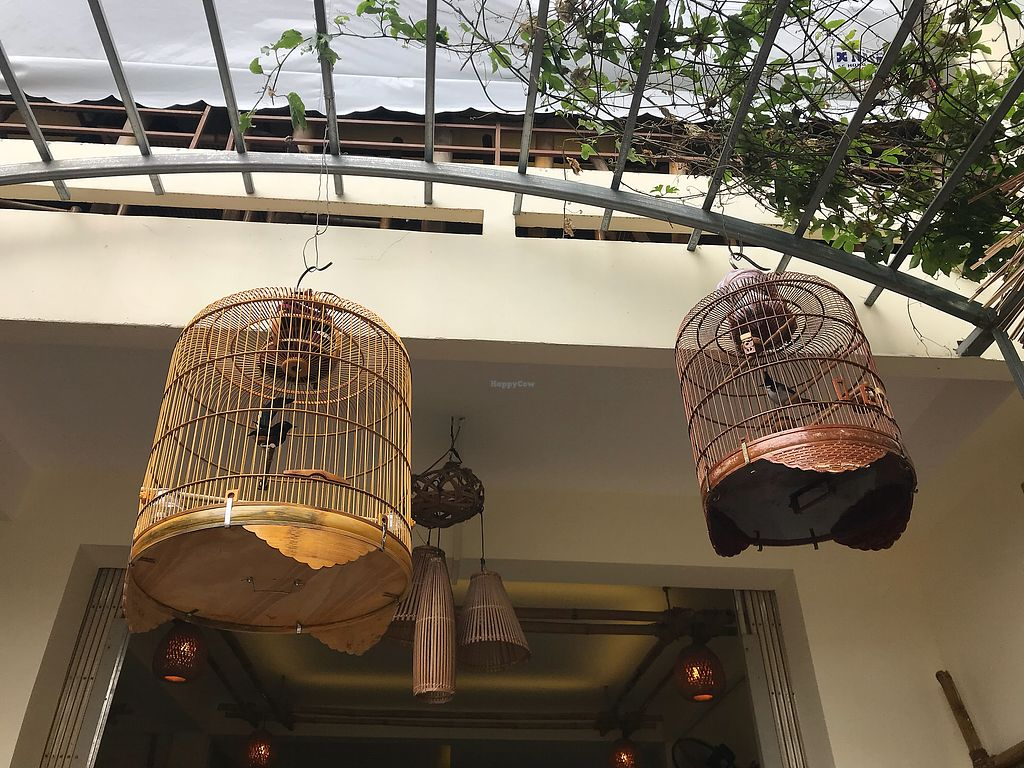 """Photo of Yén Nha Hang Chay & Yoga  by <a href=""""/members/profile/kezia"""">kezia</a> <br/>Very sad to see birds in cages at a vegan restaurant. We went elsewhere <br/> January 10, 2018  - <a href='/contact/abuse/image/84735/344936'>Report</a>"""