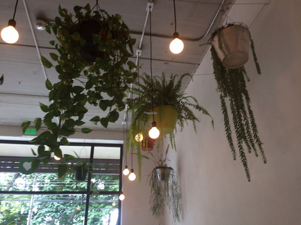 """Photo of Luv Burger  by <a href=""""/members/profile/Dancingbarefoot"""">Dancingbarefoot</a> <br/>plants hanging from the ceiling  <br/> February 11, 2017  - <a href='/contact/abuse/image/85306/225099'>Report</a>"""