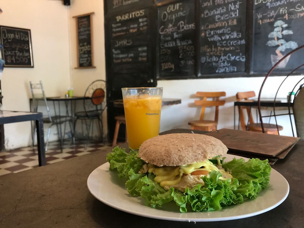 """Photo of Cafe Bonsai  by <a href=""""/members/profile/VeggieLexie"""">VeggieLexie</a> <br/>Hummus sandwich <br/> October 27, 2017  - <a href='/contact/abuse/image/86234/319368'>Report</a>"""