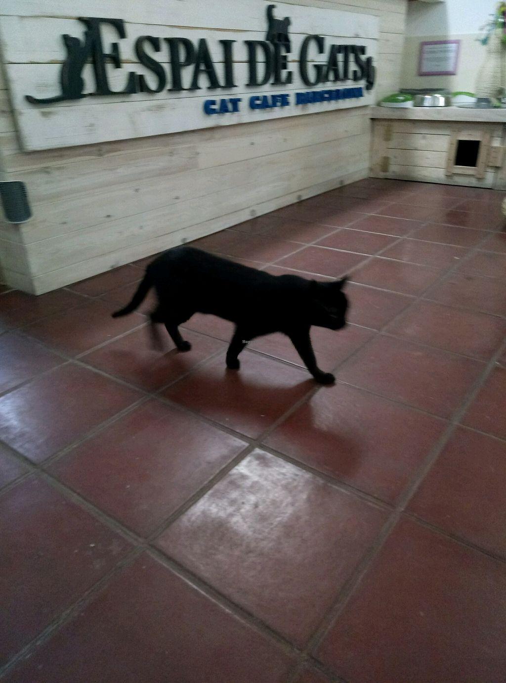 "Photo of Espai de Gats  by <a href=""/members/profile/InbalTenembaum"">InbalTenembaum</a> <br/>cat  <br/> February 8, 2018  - <a href='/contact/abuse/image/86666/356360'>Report</a>"