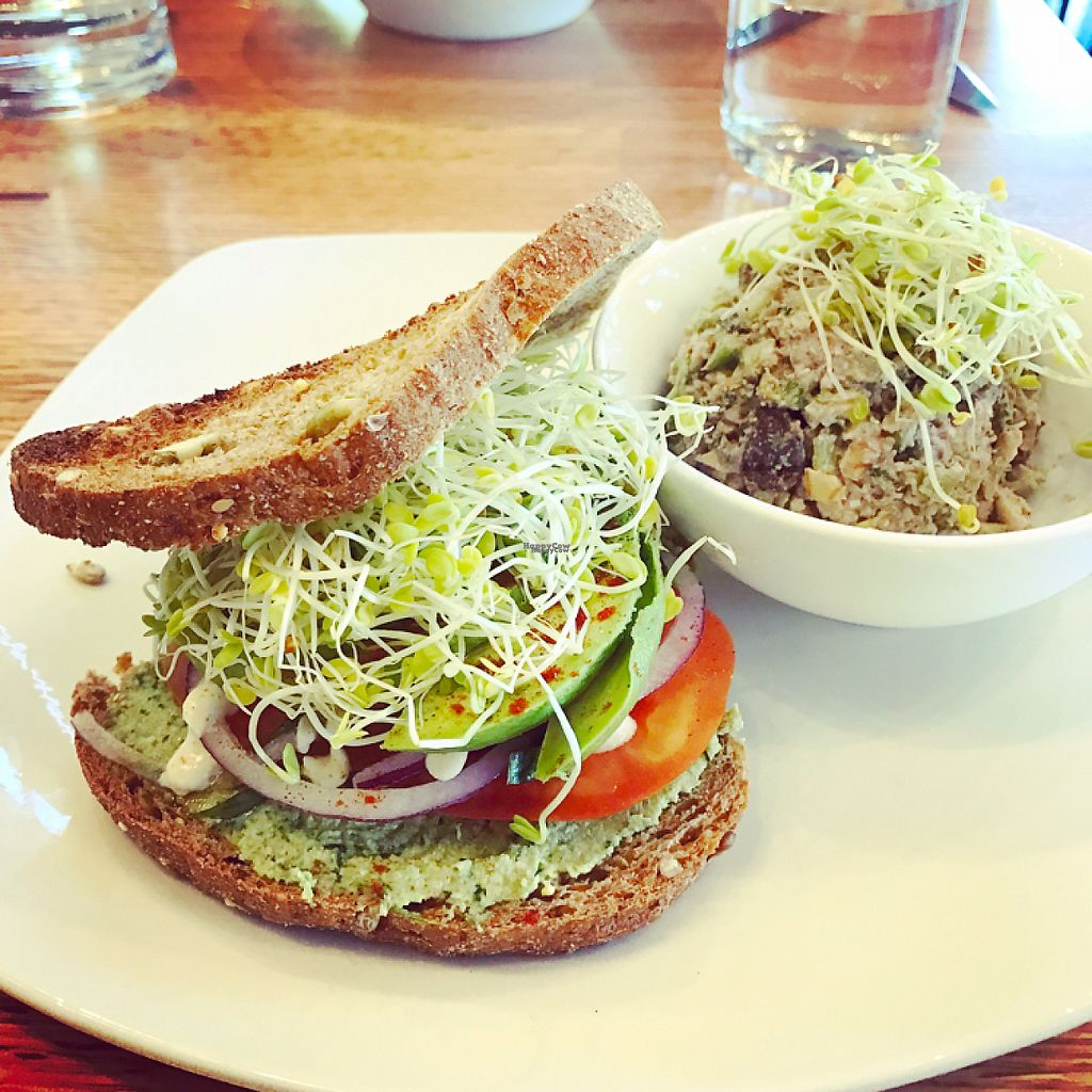 """Photo of Living Kitchen  by <a href=""""/members/profile/MizCollins12"""">MizCollins12</a> <br/>avocado sandwich  <br/> April 20, 2017  - <a href='/contact/abuse/image/88713/250275'>Report</a>"""
