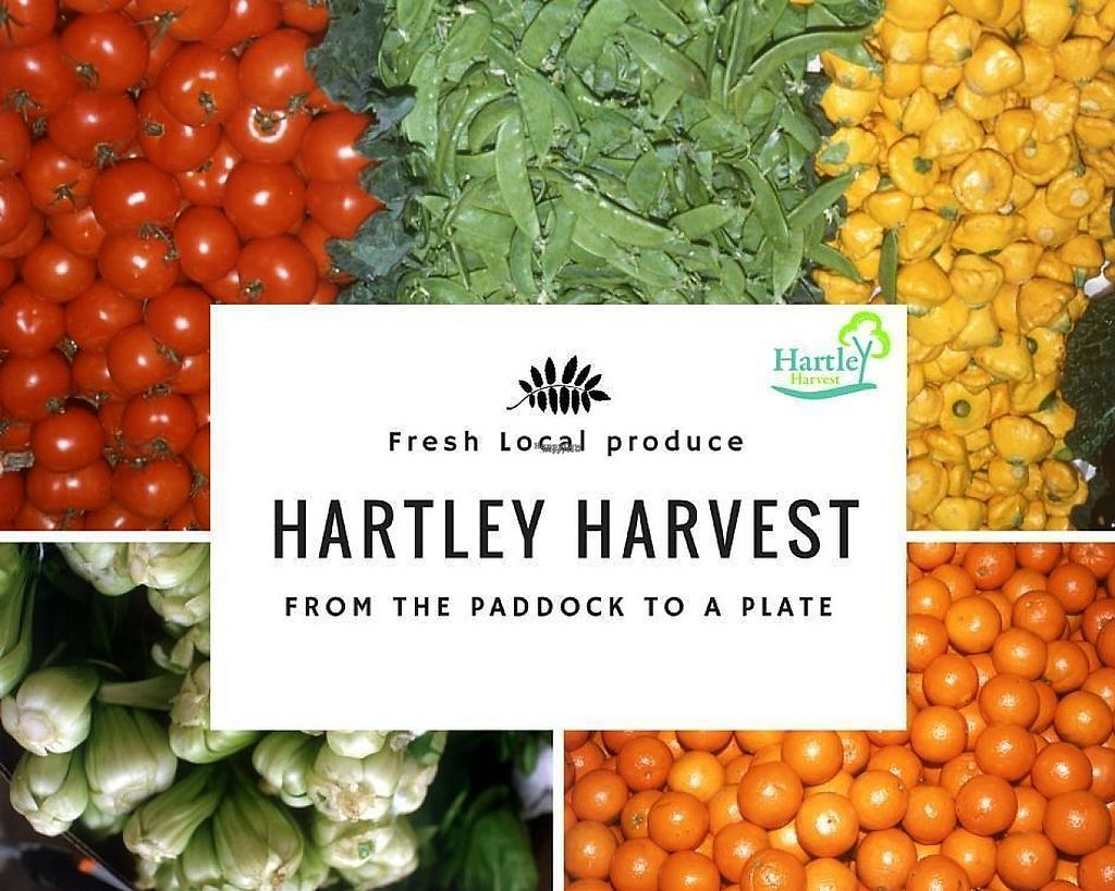 "Photo of Hartley Harvest  by <a href=""/members/profile/community"">community</a> <br/>Hartley's Harvest <br/> March 29, 2017  - <a href='/contact/abuse/image/89468/242444'>Report</a>"