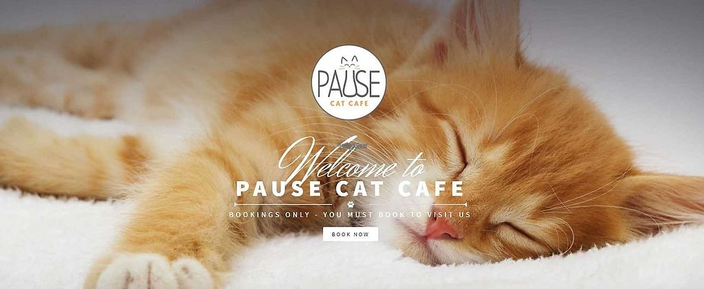 "Photo of Pause Cat Cafe  by <a href=""/members/profile/community5"">community5</a> <br/>Pause Cat Cafe <br/> April 28, 2017  - <a href='/contact/abuse/image/91193/253437'>Report</a>"