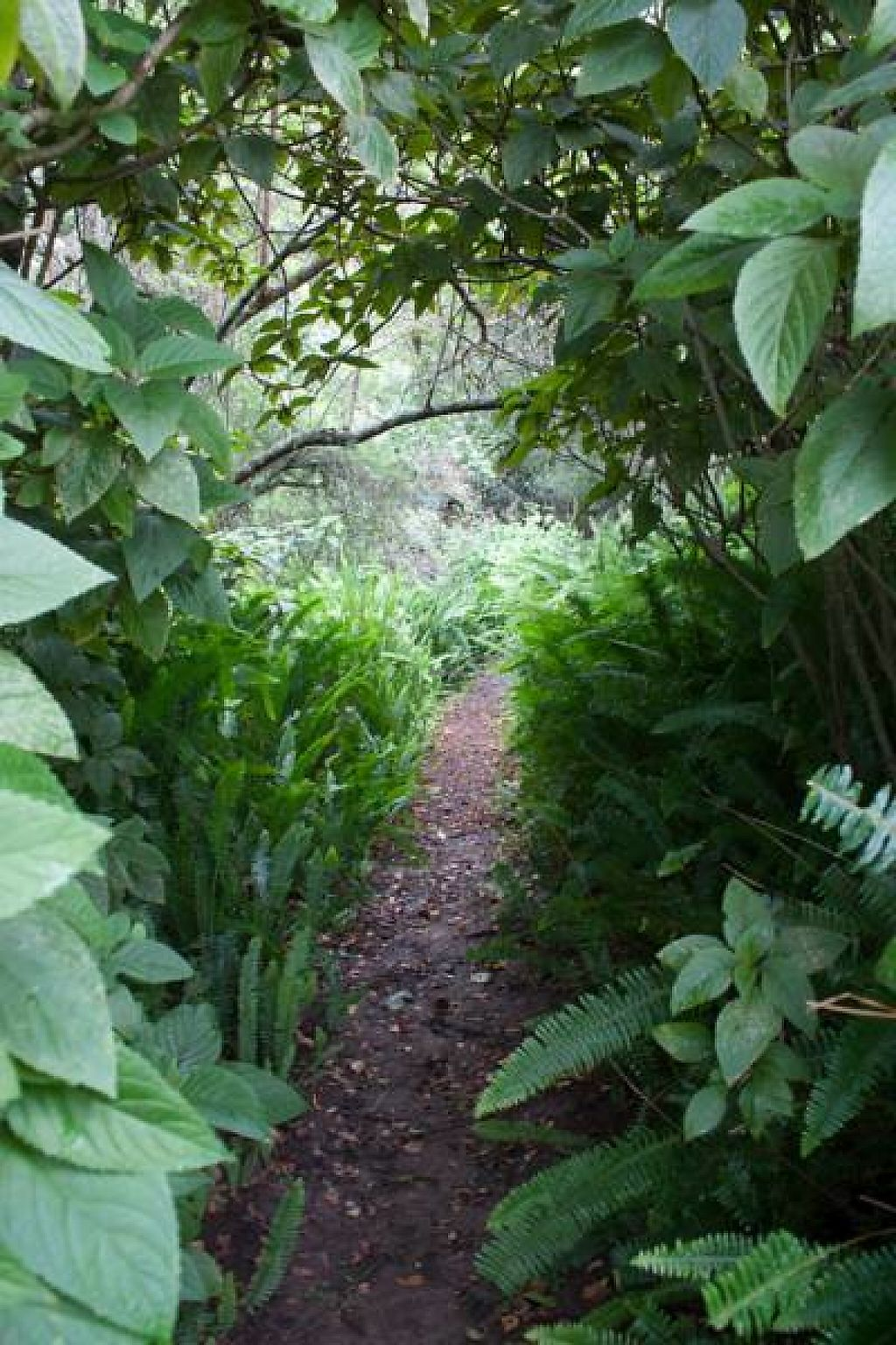 """Photo of Peace of Eden  by <a href=""""/members/profile/Jenatpeace"""">Jenatpeace</a> <br/>forest pathways <br/> May 28, 2017  - <a href='/contact/abuse/image/91626/263346'>Report</a>"""
