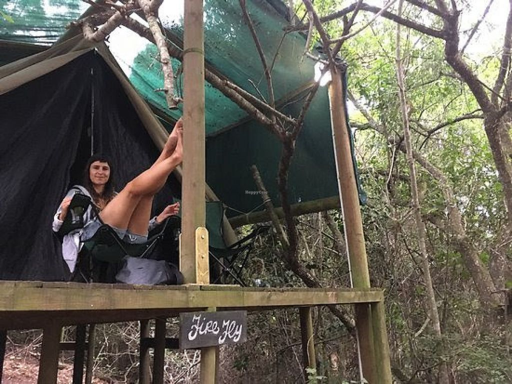 """Photo of Peace of Eden  by <a href=""""/members/profile/Jenatpeace"""">Jenatpeace</a> <br/>magical forest tents in the forest, where you can relax and be close to nature <br/> May 28, 2017  - <a href='/contact/abuse/image/91626/263360'>Report</a>"""