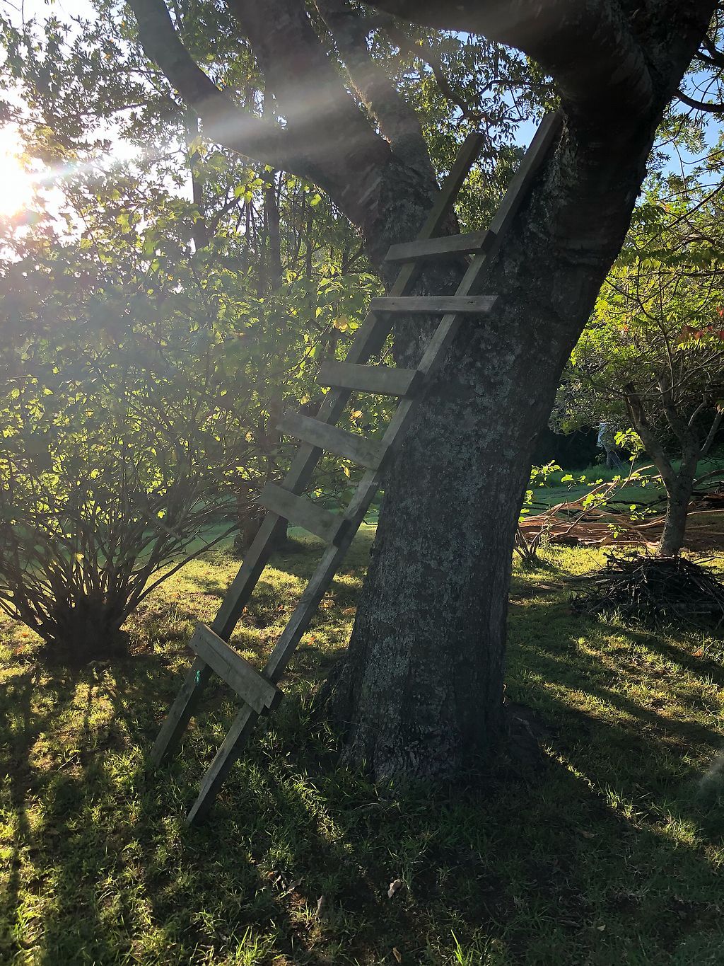 """Photo of Peace of Eden  by <a href=""""/members/profile/Jadediana"""">Jadediana</a> <br/>Ladder available if you feel like chilling in a tree for a little while!  <br/> March 28, 2018  - <a href='/contact/abuse/image/91626/377469'>Report</a>"""