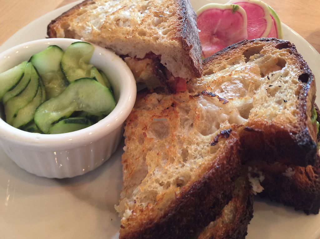 """Photo of Nourish Cafe - Nob Hill  by <a href=""""/members/profile/szcondon1"""">szcondon1</a> <br/>Miyoko's grilled veganmozz cheese sandwich.  <br/> June 7, 2017  - <a href='/contact/abuse/image/91641/266542'>Report</a>"""