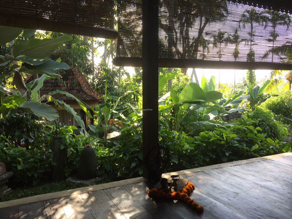 "Photo of Darshana Lodging, Spa, and Yoga  by <a href=""/members/profile/SusanRoberts"">SusanRoberts</a> <br/>garden view from spa <br/> May 18, 2017  - <a href='/contact/abuse/image/92334/259665'>Report</a>"