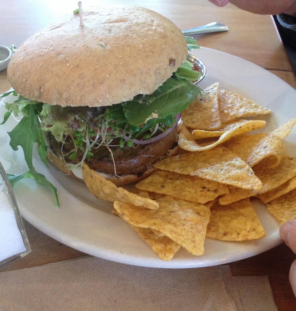 "Photo of Cafe Evolution  by <a href=""/members/profile/kelwood13"">kelwood13</a> <br/>Veggie Burger <br/> February 28, 2016  - <a href='/contact/abuse/image/9268/202732'>Report</a>"