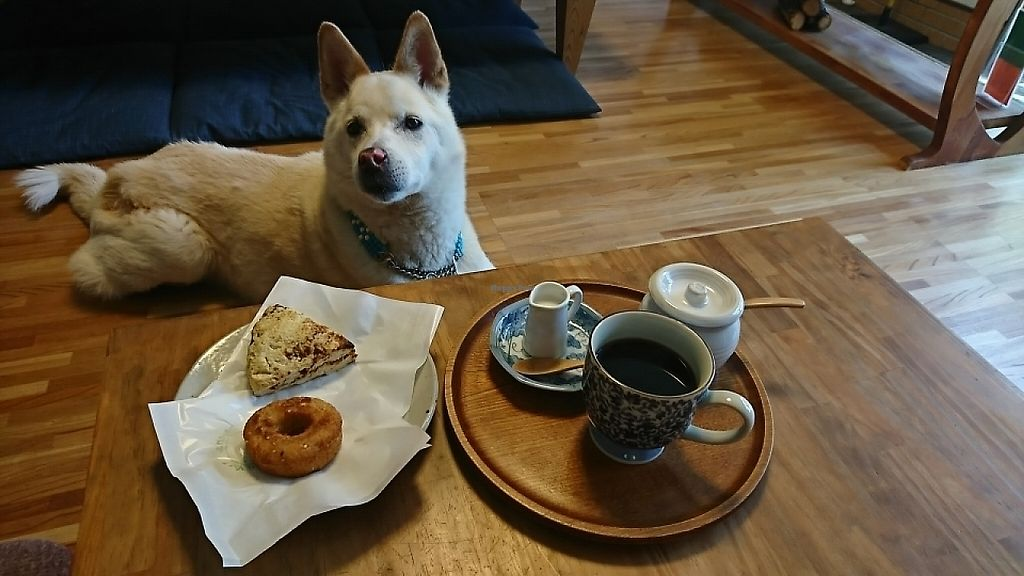 """Photo of Grain & Veggie Diner Nabana  by <a href=""""/members/profile/moka_a"""">moka_a</a> <br/>Nabana's Donut (¥200) which is its signature sweet, Miso&Walnut Scone (¥300), Rabbit-eared Crossbread (priceless) and Organic Coffee (¥400). Note the rapacious eyes firmly lock on the baked buddies without a trace of consideration for my sincere admiration toward him as the very trigger of his owner's dietary transition. Beast! <br/> June 1, 2017  - <a href='/contact/abuse/image/93208/264790'>Report</a>"""