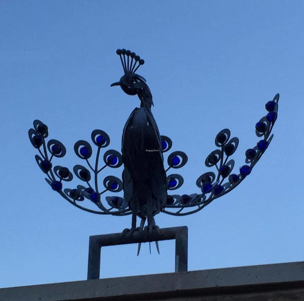 """Photo of The Peacock at Barlow  by <a href=""""/members/profile/community5"""">community5</a> <br/>The Peacock at Barlow <br/> June 2, 2017  - <a href='/contact/abuse/image/93304/265162'>Report</a>"""