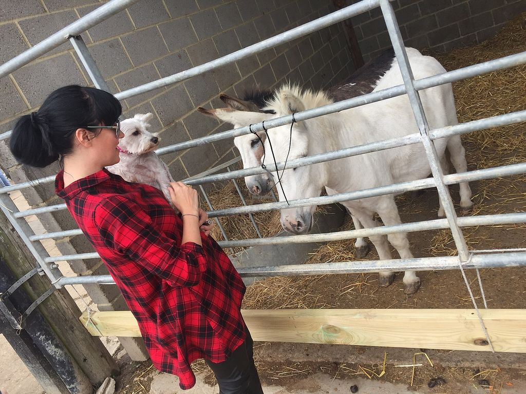 """Photo of The Retreat Animal Rescue Farm Sanctuary and Cafe  by <a href=""""/members/profile/TARAMCDONALD"""">TARAMCDONALD</a> <br/>Meeting the donkeys at the sanctuary  <br/> July 22, 2017  - <a href='/contact/abuse/image/93600/283386'>Report</a>"""