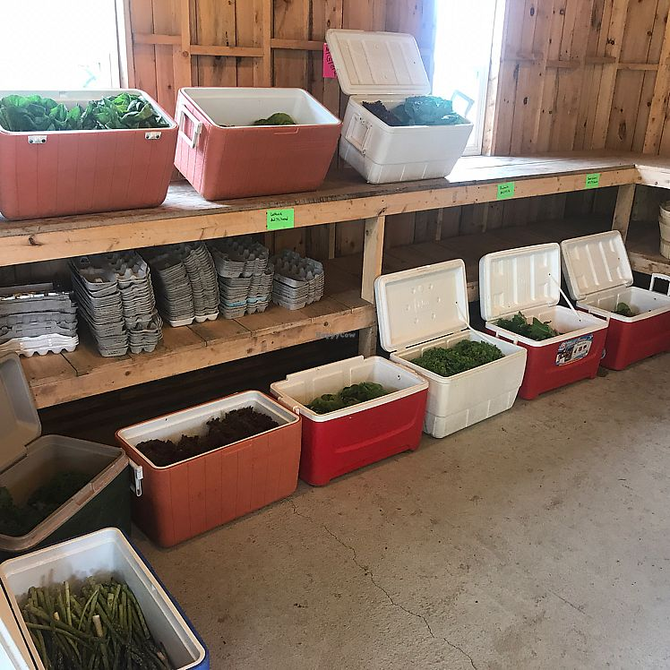 """Photo of Brown's Farm Stand  by <a href=""""/members/profile/Sarah%20P"""">Sarah P</a> <br/>produce <br/> June 17, 2017  - <a href='/contact/abuse/image/94233/270136'>Report</a>"""