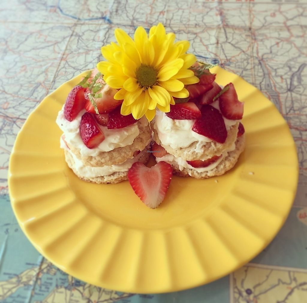 "Photo of The Wise Owl Cafe  by <a href=""/members/profile/Jpp14wdstk"">Jpp14wdstk</a> <br/>Vegan strawberry shortcake with cashew cream  <br/> June 19, 2017  - <a href='/contact/abuse/image/94361/270713'>Report</a>"