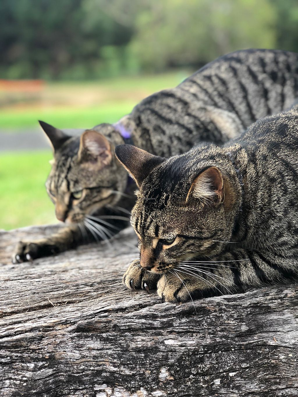 """Photo of Back 2 Earth B&B  by <a href=""""/members/profile/JennyHammond"""">JennyHammond</a> <br/>Simba and Mufasa - rescued brothers  <br/> March 4, 2018  - <a href='/contact/abuse/image/96289/366423'>Report</a>"""