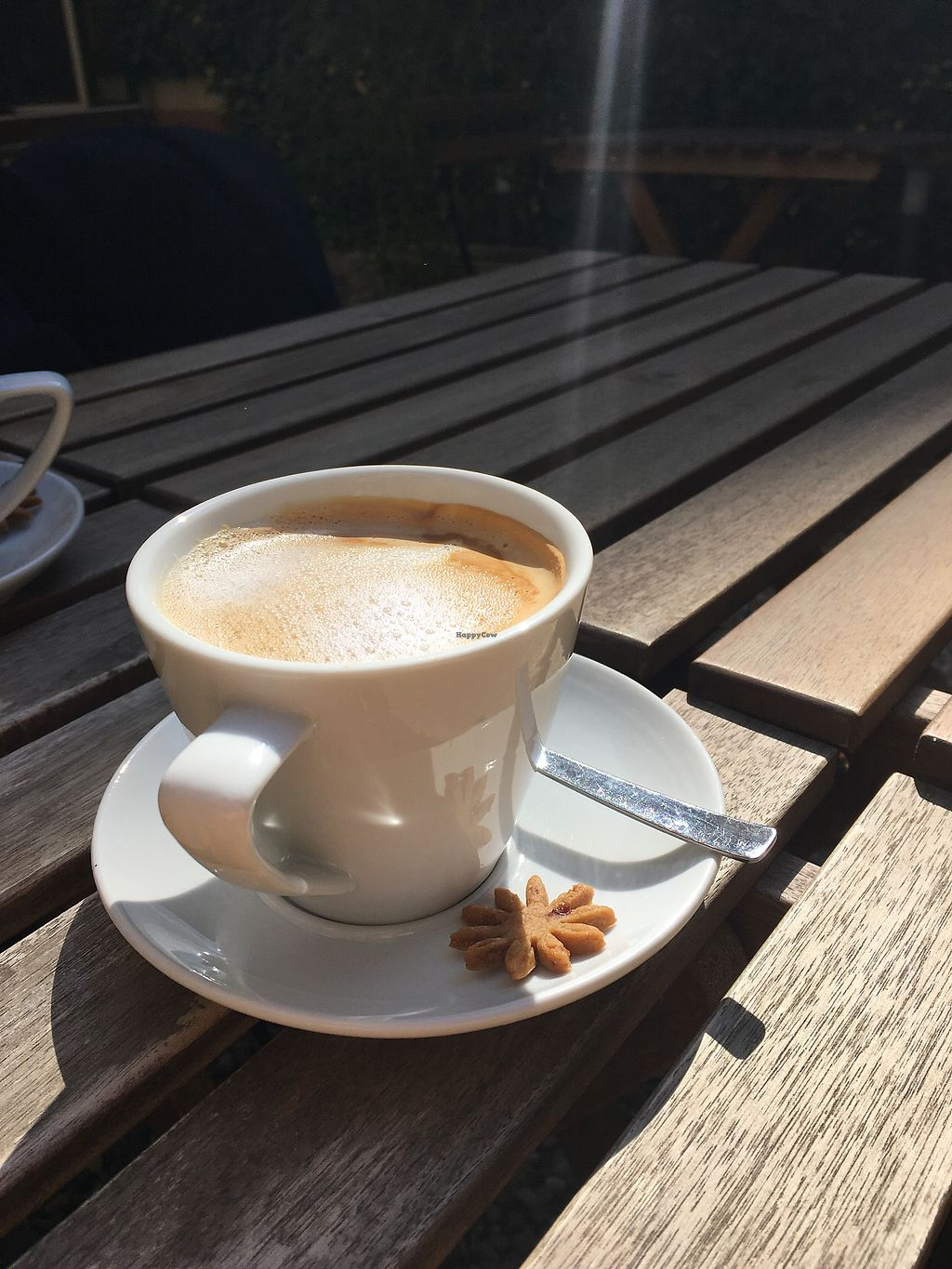 """Photo of PappaGioia  by <a href=""""/members/profile/suzyseraphina"""">suzyseraphina</a> <br/>Coffee in the sunshine <br/> March 25, 2018  - <a href='/contact/abuse/image/99034/375748'>Report</a>"""