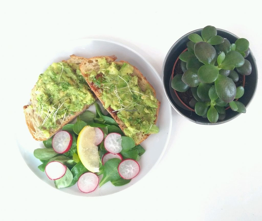 """Photo of Hom  by <a href=""""/members/profile/SarahPlayfair"""">SarahPlayfair</a> <br/>Avocado on toast <br/> August 25, 2017  - <a href='/contact/abuse/image/99500/297032'>Report</a>"""