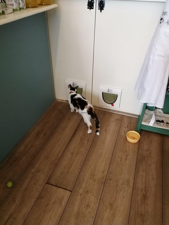 "Photo of Kattencafé Ditjes & Katjes  by <a href=""/members/profile/Gudrun"">Gudrun</a> <br/>Inhabitants of Cat café ""Ditjes & Katjes"" <br/> September 10, 2017  - <a href='/contact/abuse/image/99540/302874'>Report</a>"