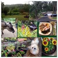 """Photo of Velo Bed and Breakfast  by <a href=""""/members/profile/BethanyDavis"""">BethanyDavis</a> <br/>Photo collage of our stay at Velo Bed & Breakfast.  We had a great experience!   <br/> August 3, 2014  - <a href='/contact/abuse/image/38811/75899'>Report</a>"""