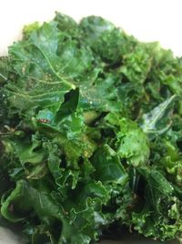 "Photo of Sanctuary Vegan Cafe  by <a href=""/members/profile/happycowgirl"">happycowgirl</a> <br/>Sautéed kale <br/> September 5, 2017  - <a href='/contact/abuse/image/84135/301229'>Report</a>"